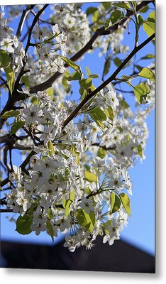 Metal Print featuring the photograph Spring Blooms by Kay Novy