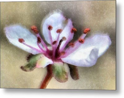 Spring Blossoms 1 Metal Print by Angelina Vick