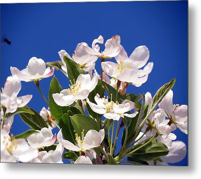 Spring Blossoms Metal Print by Darleen Stry