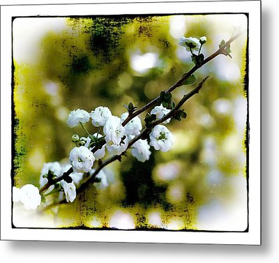 Metal Print featuring the photograph Spring Bough by Judi Bagwell