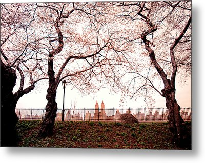 Spring Cherry Blossoms - Central Park Reservoir Metal Print by Vivienne Gucwa