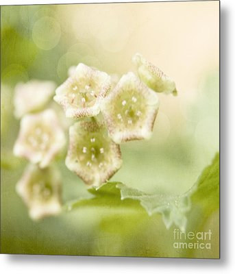 Spring Currant Blossom Metal Print by Agnieszka Kubica