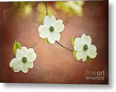 Metal Print featuring the photograph Spring Dogwood Blooms by Cheryl Davis