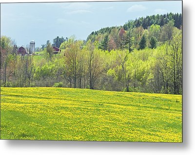 Spring Farm Landscape With Dandelion Bloom In Maine Photograph Metal Print by Keith Webber Jr