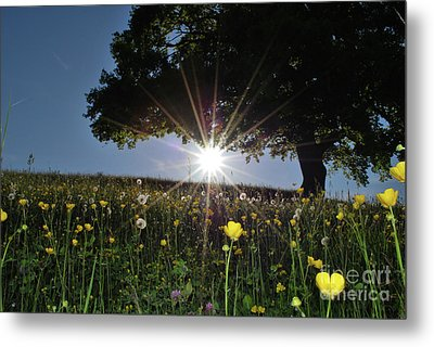 Spring Field Metal Print by Bruno Santoro