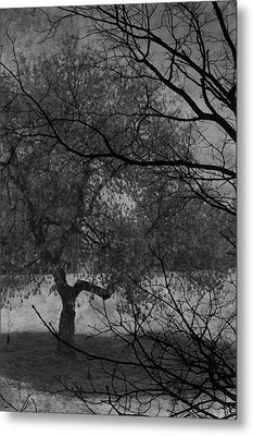 Spring For Leaves  Metal Print by Jerry Cordeiro