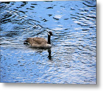 Metal Print featuring the photograph Spring Goose by Wendy McKennon