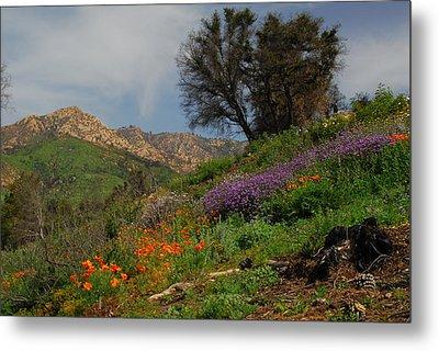 Metal Print featuring the photograph Spring In Santa Barbara by Lynn Bauer