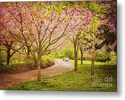 Metal Print featuring the photograph Spring In The Park by Cheryl Davis