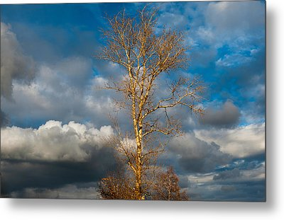 Spring Light In Autumnal Day Metal Print by Jenny Rainbow