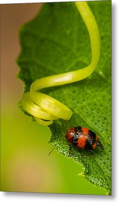 Spring Loaded Metal Print