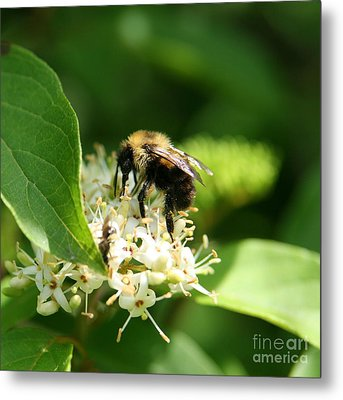Spring Pollination Metal Print by Neal Eslinger