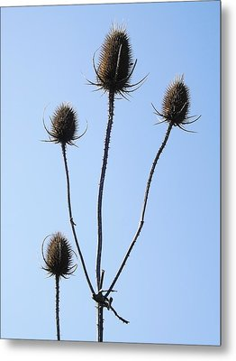Metal Print featuring the photograph Spring Weeds 1 by Gerald Strine