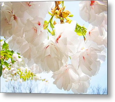 Spring White Pink Tree Flower Blossoms Metal Print by Baslee Troutman