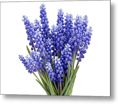 Metal Print featuring the photograph Springs Flowers  by Aleksandr Volkov