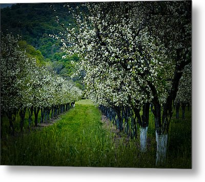 Springtime In The Orchard II Metal Print by Bill Gallagher