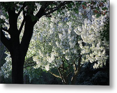 Springtime In Wisconsin Metal Print by James Hammen