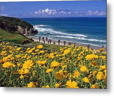 Springtime On The Headlands Metal Print by Cliff Wassmann