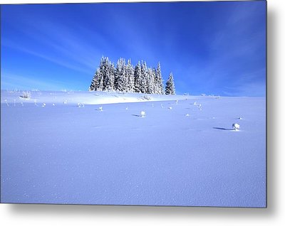 Spruce Grove In Winter Metal Print by Michele Cornelius