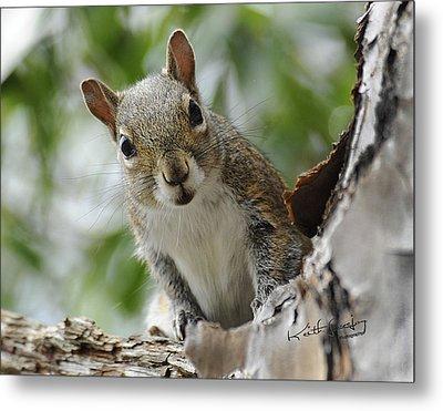 Squirrel 2 Metal Print