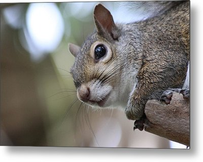 Squirrel Metal Print by Jeanne Andrews