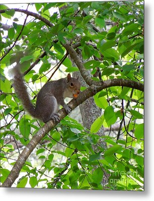 Metal Print featuring the photograph Squirrel With Candy by Renee Trenholm