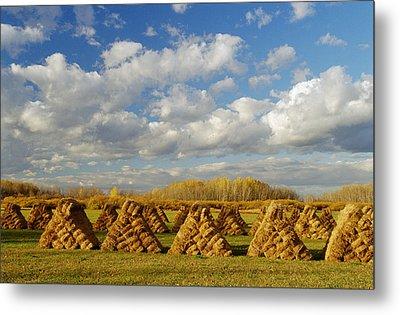 Stacked Hay Bales In Field, Selkirk Metal Print by Dave Reede