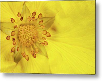 Stamen Metal Print by Billy Currie Photography