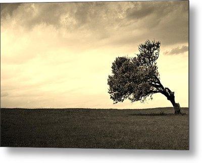 Stand Alone Tree 1 Metal Print by Sumit Mehndiratta