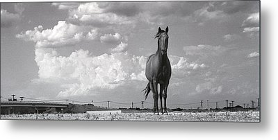 Metal Print featuring the photograph Standing Alone by Jim  Arnold