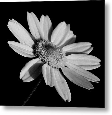 Metal Print featuring the photograph Standing Alone by Karen Harrison