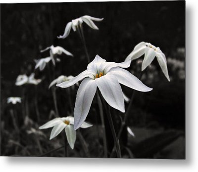 Metal Print featuring the photograph Star Flowers by Deborah Smith