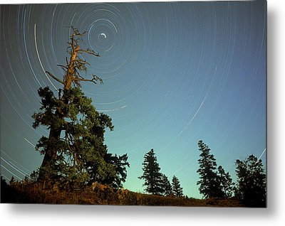 Star Trails, North Star And Old Douglas Metal Print by David Nunuk