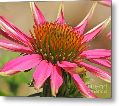 Metal Print featuring the photograph Starburst by Eve Spring