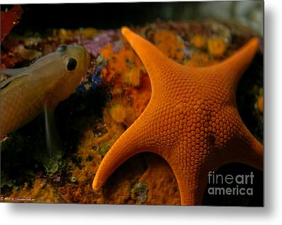 Starfish And Friend Metal Print by Mitch Shindelbower