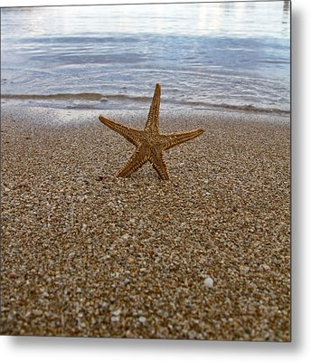 Starfish Metal Print by Stelios Kleanthous