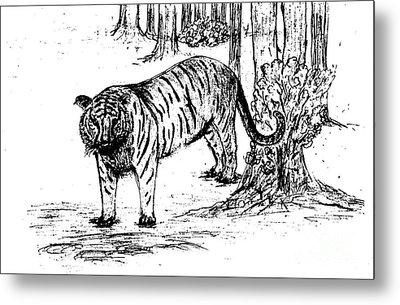 Staring Tiger Metal Print by Mashukur  Rahman