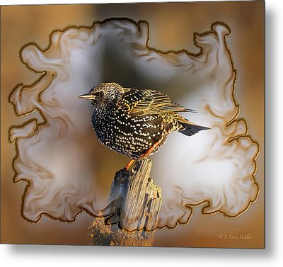 Starling On His Perch Metal Print