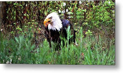 Stay Away From My Dinner Metal Print by Don Mann
