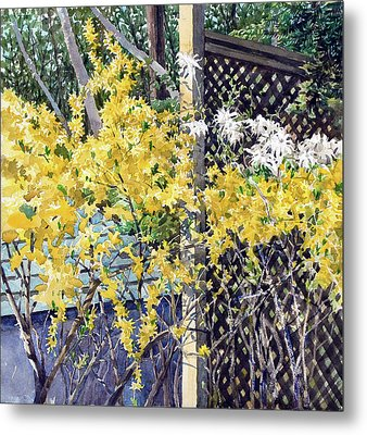 Stella Magnolia And Forthysia Metal Print by Peter Sit
