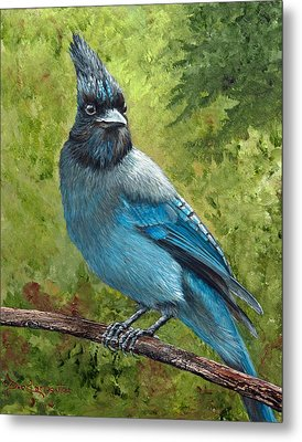Stellar Jay Metal Print by Dee Carpenter