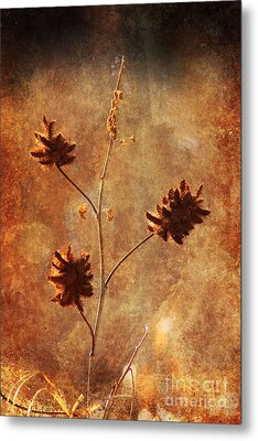 Still Standing Metal Print by Alyce Taylor
