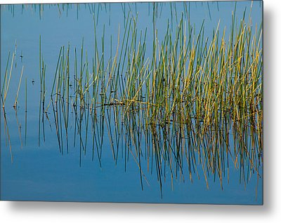 Still Water And Grasses Metal Print by Rich Franco