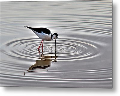 Metal Print featuring the photograph Black-necked Stilt by Tam Ryan