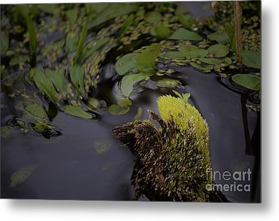 Stirring The Swamp Pot Metal Print by The Stone Age