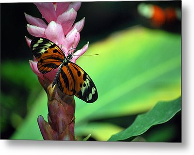 Stopping For Lunch Metal Print