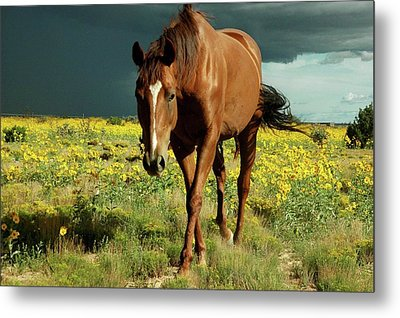 Storm Horse Metal Print by photo © Jennifer Esperanza