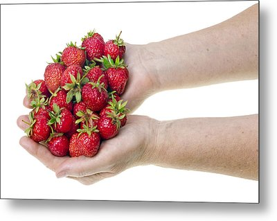 Strawberries In Hands Metal Print