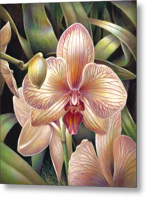 Striped Peach Orchid Metal Print by Nancy Tilles