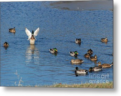 Metal Print featuring the photograph Struttin It by Mark McReynolds